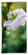 In Early Morning Light - White Rose Beach Towel