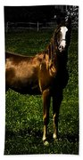 In The Corral 1 - Featured In Comfortable Art And Wildlife Groups Beach Towel