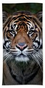 Tiger In Your Face Beach Towel