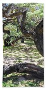In The Depth Of Enchanting Forest V Beach Towel