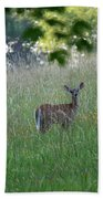 White-tailed Deer In Meadow  Beach Towel