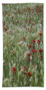 Indian Paintbrush And Foxtail Barley Beach Towel