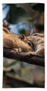 Indian Palm Squirrel Beach Towel