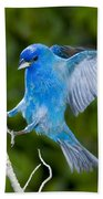 Indigo Bunting Alighting Beach Towel