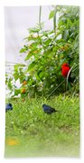 Indigo Bunting And Scarlet Tanager Beach Towel