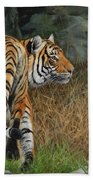 Indo-chinese Tiger Beach Towel