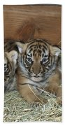 Indochinese Tiger Cubs In Sleeping Box Beach Towel