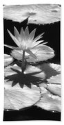 Infrared - Water Lily 02 Beach Towel