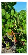 Inglenook Vineyard -10 Beach Towel