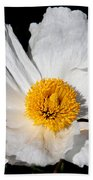 Innocent Krinkle - White Peony By Diana Sainz Beach Towel