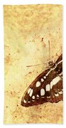 Insect Study Number 66 Beach Towel