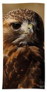 Red Tailed Hawk Portrait Beach Towel