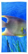 Into Blue - Tropical Fish By Sharon Cummings Beach Towel