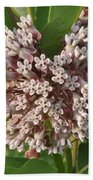 Into The Heart Of A Milkweed Flower Beach Towel