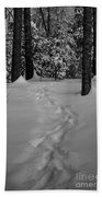 Into The Woods Pisgah Forest Black And White Beach Towel