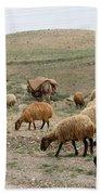 Iran Sheep Beach Towel