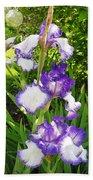 Iris Flowers Beach Towel