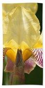 Iris Beach Sheet