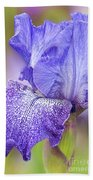Iris Purple Pepper Beach Towel