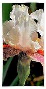Iris White To Pink Beach Towel
