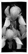 Irises In Black And White Beach Towel