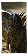 Island Lizards Three Beach Towel