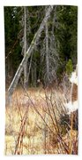 Island Park Cattails Beach Towel