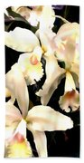 Ivory Cattleya Orchids Beach Towel
