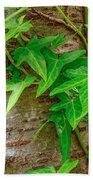 Ivy Wrapped Tree Trunk Beach Towel