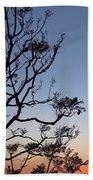 Jacaranda Sunset Beach Towel by Rona Black