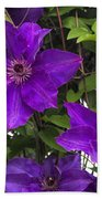 Jackmanii Purple Clematis Vine Beach Towel
