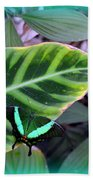 Jade Butterfly With Vignette Beach Towel