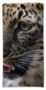Jaguar-09498 Beach Towel