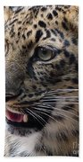 Jaguar-09499 Beach Towel