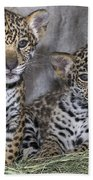 Jaguar Cubs Beach Towel