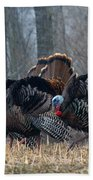 Jake Eastern Wild Turkeys Beach Towel by Linda Freshwaters Arndt