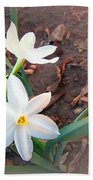January 2014 Paper-whites In Bloom Beach Towel