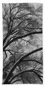 January Tree Beach Towel