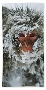 Japanese Macaque Covered In Snow Japan Beach Towel