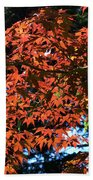 Japanese Maple Canopy Beach Towel