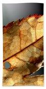 Japanese Maple Leaf Brown - 4 Beach Towel