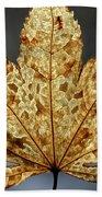 Japanese Maple Leaf Brown - 3 Beach Towel