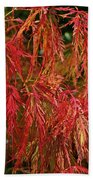 Japanese Maple Beach Towel