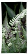 Japanese Painted Fern Beach Towel