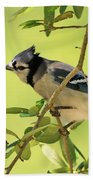 Jay In Nature Beach Towel