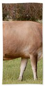 Jersey Cow In Pasture Beach Towel