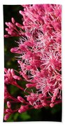Joe Pye Weed Beach Towel