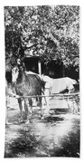 Johnston Horse Wagon Beach Sheet