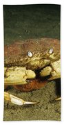Jonah Crab Beach Towel