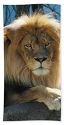 Joshua The Lion On His Rock Beach Towel